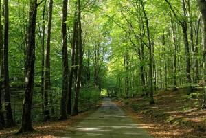 Sindal Camping - Tolne Skov - Skove