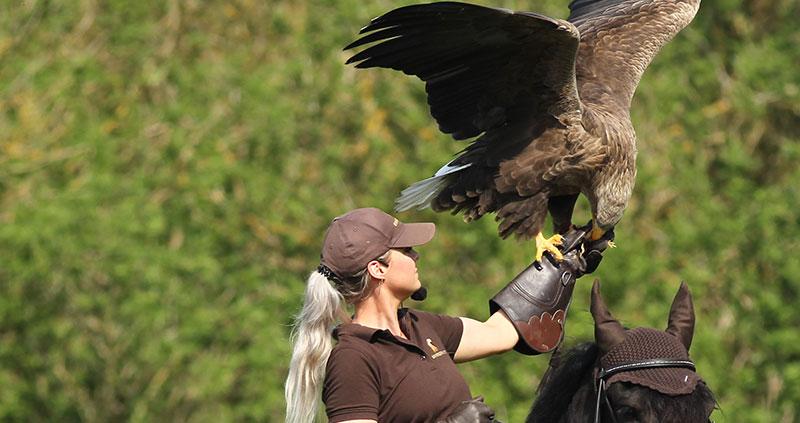 Eagleworld