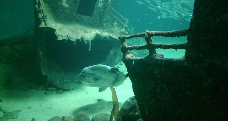 North Sea Oceanarium